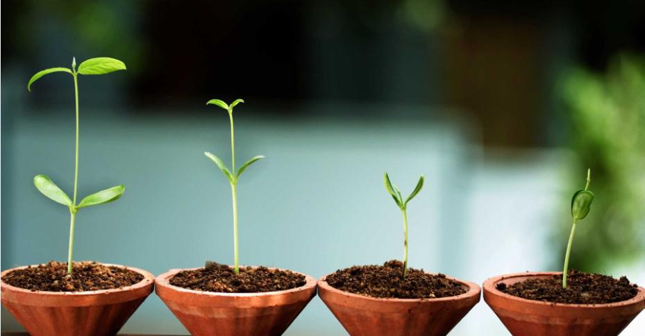 Start & Growth